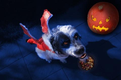 halloween-990721_960_720.jpg